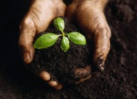 Heart and Soil