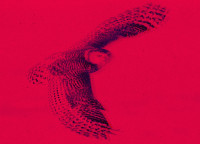 High Flying Owls: Episode 8