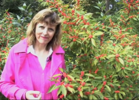 In the Garden with Jenny: Holly Trees