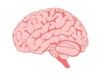 Bouncing Back: Brain Trauma