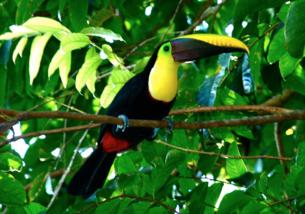 Culture Quest Costa Rica